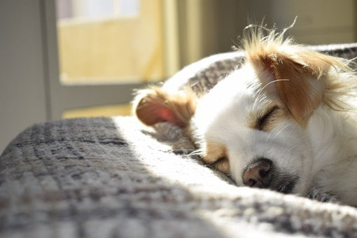 dog sitting work at home business idea